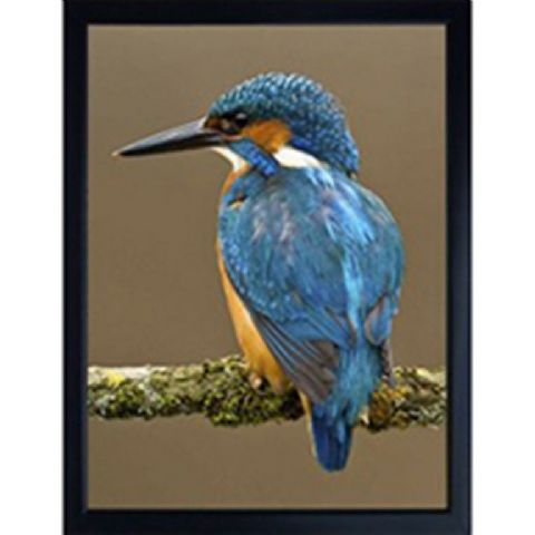 KINGFISHER 3D FRIDGE MAGNET